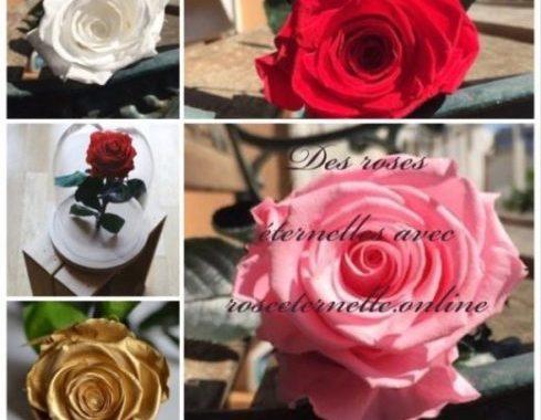 avis rose eternelle acheter une rose eternelle pas cher roseternelles.online my sweet beauté