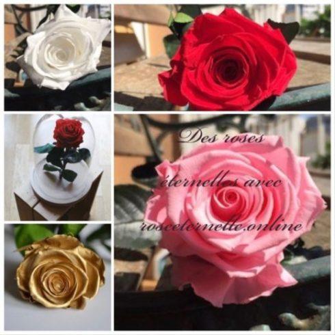 La rose stabilisée by rose éternelle online